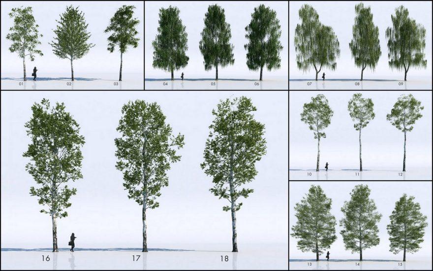 18-free-3d-birch-trees